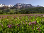 Easley-Peak-Pasture-58x38-C3
