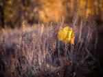 Fall-Leaf