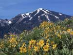 SV-Spring-WIldflowers