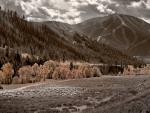 Trail-Creek-Sheep